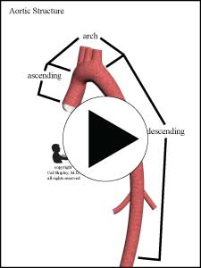 Aortic Structure